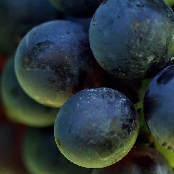 Consorzio dei vini dei Colli Berici