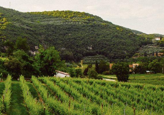 La strada dei vini dei Colli Berici